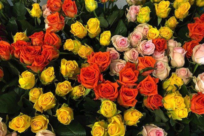 Knapp 500 Rosen hat die Spitäler fmi AG an ihre Mitarbeitenden verschenkt.