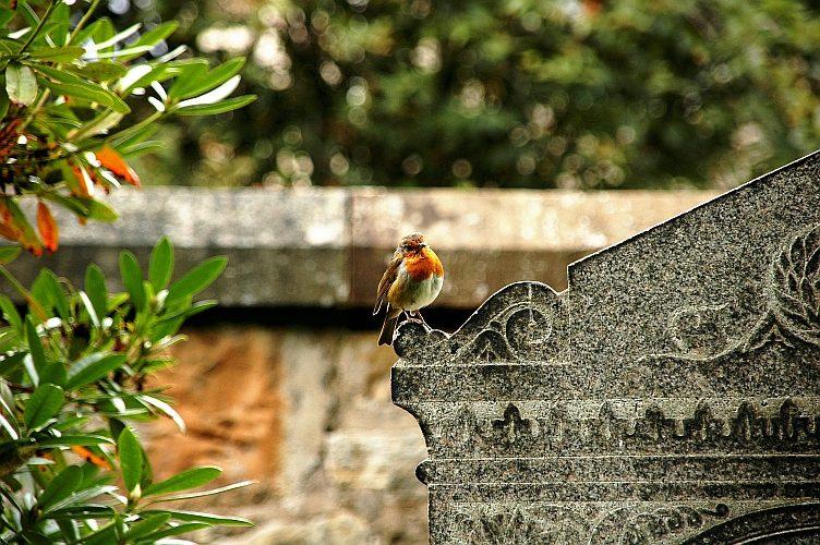 Vogel auf einem Grabstein